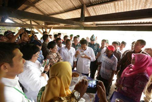 Kunjungan Presiden di Meranti, Jokowi Jalan di Atas Tual Sagu dan Cicipi Mie Sagu Selatpanjang