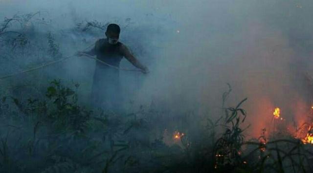 5 Hektare Lahan di Kempas Inhil Terbakar, Petugas Gabungan Masih Lakukan Pemadaman
