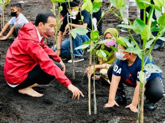 Presiden Tanam Mangrove untuk Cegah Abrasi, Yanti Komalasari: Bengkalis Jangan Mengecil Lagi