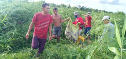 Seorang Pria di Dumai Ditemukan Tewas, Tubuhnya Tercabik-cabik Diduga Diterkam Harimau