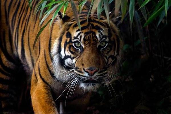 Banyak Kejanggalan Terkait Kematian Remaja di Teluk Lanus Siak, Tak Seperti Dimakan Harimau
